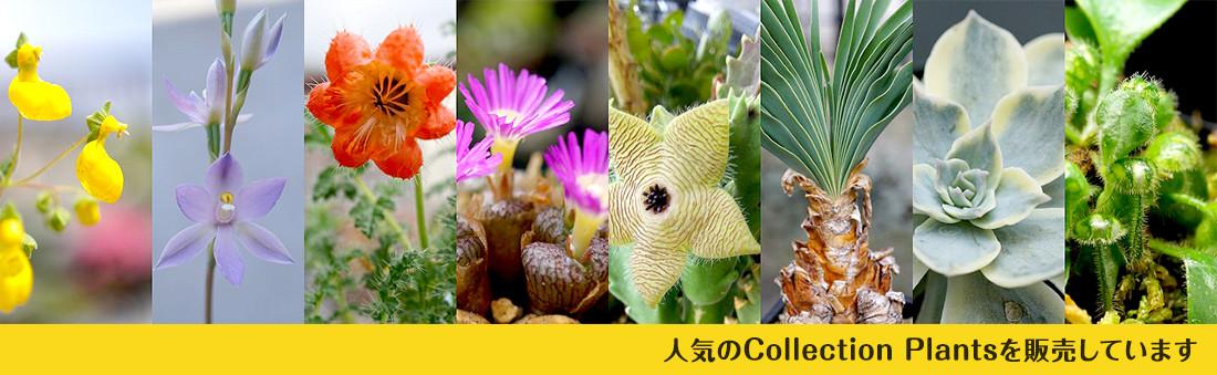 人気のCollection plants を販売しています